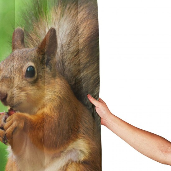 Squirrel Shower Curtain , Shower Bathroom Curtain 55x72 Inch Waterproof Fabric with Hooks , Wildly used in bathroom and hotel etc.