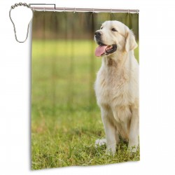 Beauty Golden Retriever Dog Shower Curtain , Shower Bathroom Curtain 55x72 Inch Waterproof Fabric with Hooks , Wildly used in bathroom and hotel etc.
