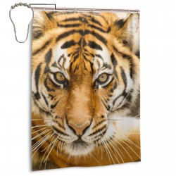 Beautiful Amur Tiger Animal Kingdom Shower Curtain , Shower Bathroom Curtain 55x72 Inch Waterproof Fabric with Hooks , Wildly used in bathroom and hotel etc.