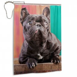 Bulldog Black Shower Curtain , Shower Bathroom Curtain 55x72 Inch Waterproof Fabric with Hooks , Wildly used in bathroom and hotel etc.