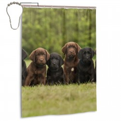 Chocolate Labrador Retriever Puppies. Shower Curtain , Shower Bathroom Curtain 55x72 Inch Waterproof Fabric with Hooks , Wildly used in bathroom and hotel etc.