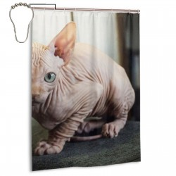 Cat Naked Standing The Sofa. Shower Curtain , Shower Bathroom Curtain 55x72 Inch Waterproof Fabric with Hooks , Wildly used in bathroom and hotel etc.