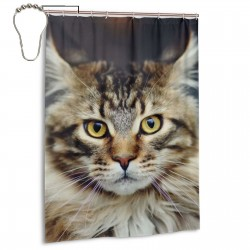 Glare Cat Shower Curtain , Shower Bathroom Curtain 55x72 Inch Waterproof Fabric with Hooks , Wildly used in bathroom and hotel etc.
