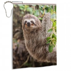 Common Sloth On Jungle Shower Curtain , Shower Bathroom Curtain 55x72 Inch Waterproof Fabric with Hooks , Wildly used in bathroom and hotel etc.