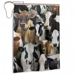 Black Cows Farm Animals Shower Curtain , Shower Bathroom Curtain 55x72 Inch Waterproof Fabric with Hooks , Wildly used in bathroom and hotel etc.