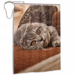 Cute Scottish Fold Cat. Shower Curtain , Shower Bathroom Curtain 55x72 Inch Waterproof Fabric with Hooks , Wildly used in bathroom and hotel etc.