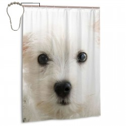 Cute Samoyed Shower Curtain , Shower Bathroom Curtain 55x72 Inch Waterproof Fabric with Hooks , Wildly used in bathroom and hotel etc.